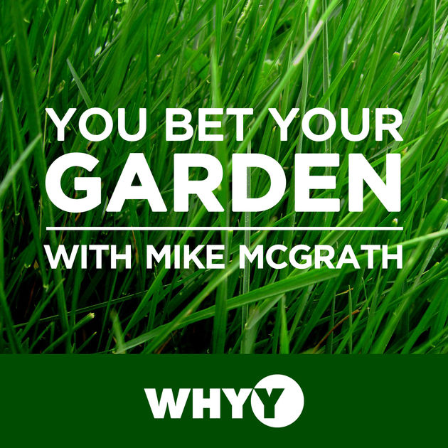 PODCASTS TO LISTEN TO: You Bet Your Garden and the best gardening podcasts
